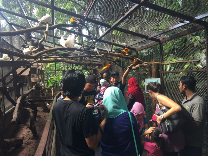 kl-tower-mini-zoo-taman-burung