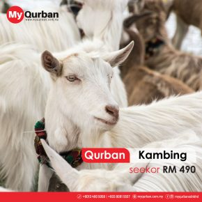 Qurban_Kambing