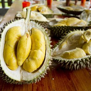 Visit a durian farm to feast on the King of Fruit